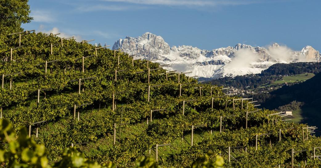 6 imperdibili itinerari sulle vie del vino dell'Alto Adige