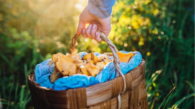 Andare a funghi tra la magia della Ruska finlandese
