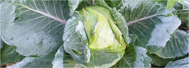 In Friuli -Venezia Giulia quattro nuovi Presìdi Slow Food