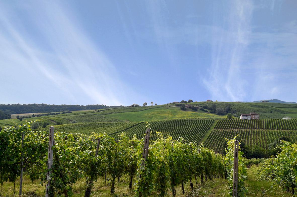 A settembre il Valtidone Wine Fest ritorna al completo