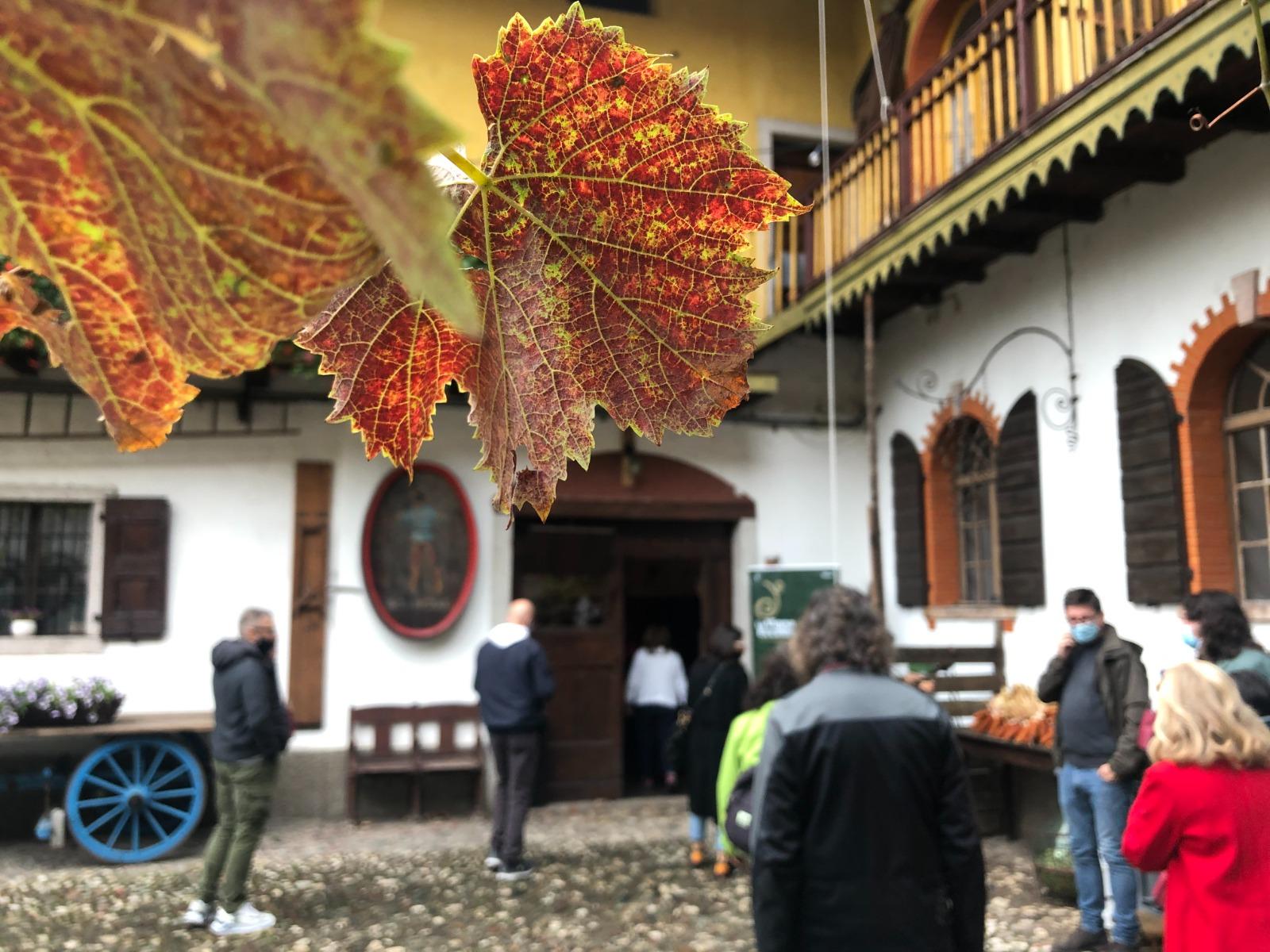 Trentino, a settembre quattro giorni dedicati al Marzemino